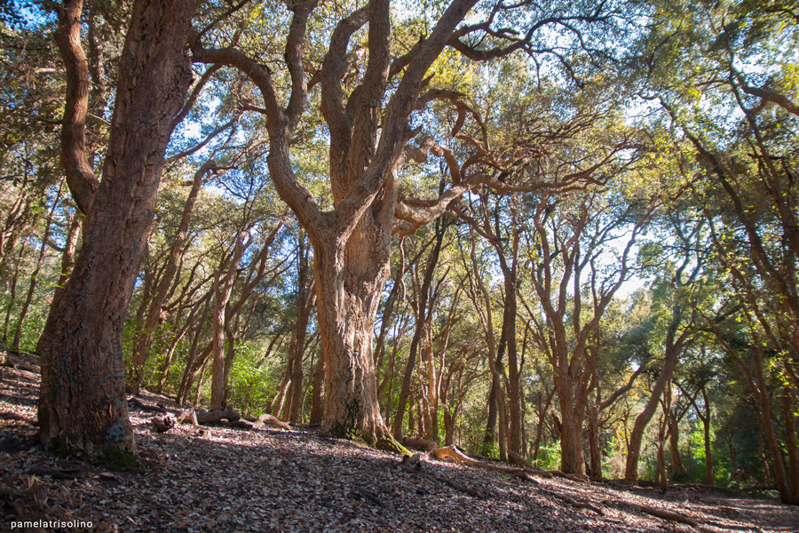 bosco monte Catillo