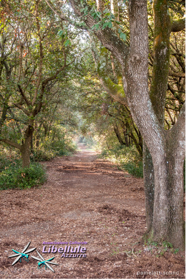 sentiero natura Litorale Romano